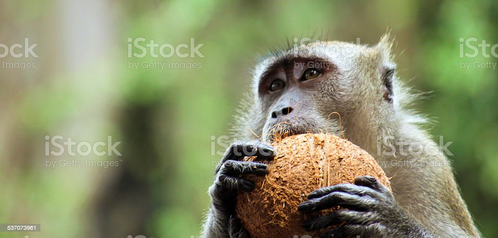 Monkey at Batu caves stock photo