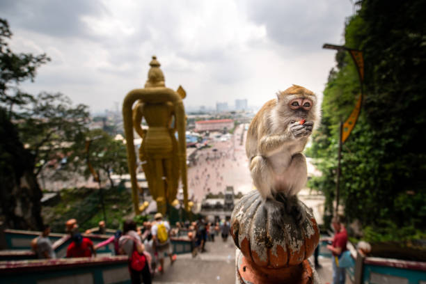 Monkey at Murugan statue, Batu Caves, Malaysia Batu Caves, Malaysia: A monkey eats a fruit behind the golden Murugan statue in front of the entrance to the Hindu shrines at Batu Caves. kuala lumpur batu caves stock pictures, royalty-free photos & images
