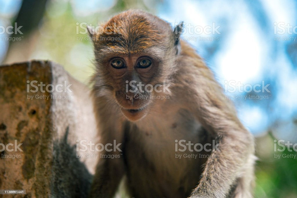 Monkey At Railay Beach Thailand Stock Photo Download Image