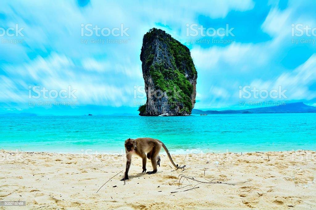 Fotografía de Monos En La Playa y más banco de imágenes de Agua | iStock