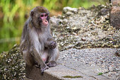 Monkey in the zoo at Amersfoort, Netherlands