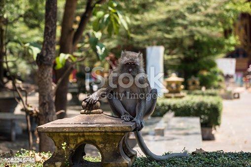 istock Monkey at wat tham sua, Krabi, Thailand 1282346743