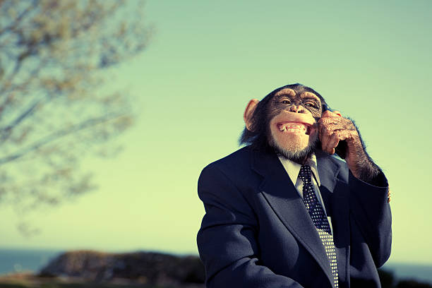monkey communication - monkey stock photos and pictures