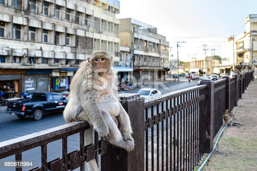 Monkey crowd sitting on fence in city..
