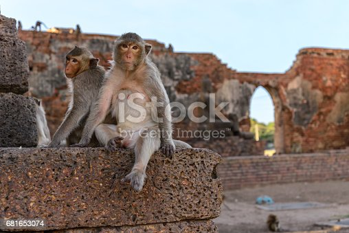 Monkey crowd was defending a danger to others.
