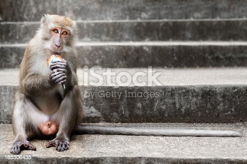 Monkey eating a ice cream