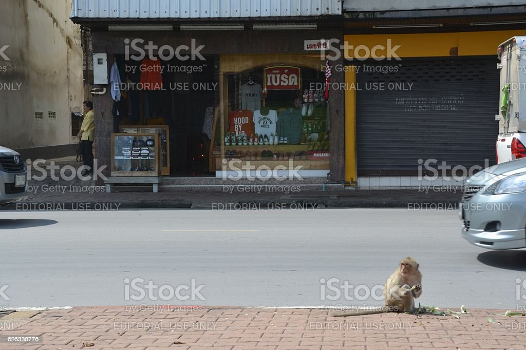 Monkey eating aside a street in Lopburi, Thailand stock photo