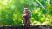 istock Monkey eating orange fruit and sitting 1250006474