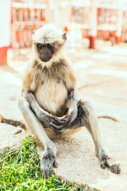 Monkey eats stock photo