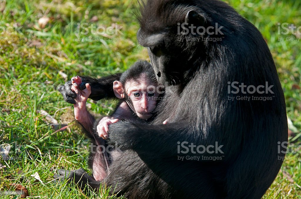 monkey family royalty-free stock photo