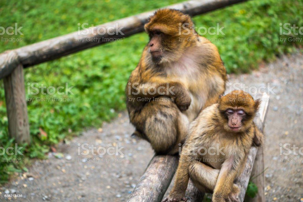 Monkey forest - Bench – Foto