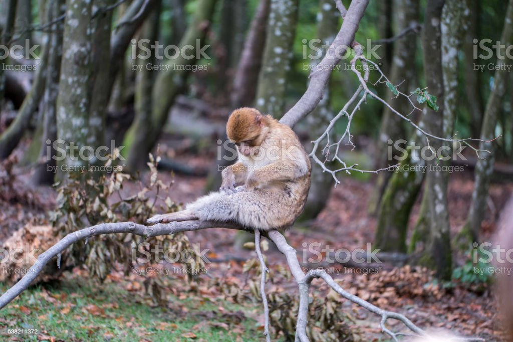 Monkey forest - Eating – Foto