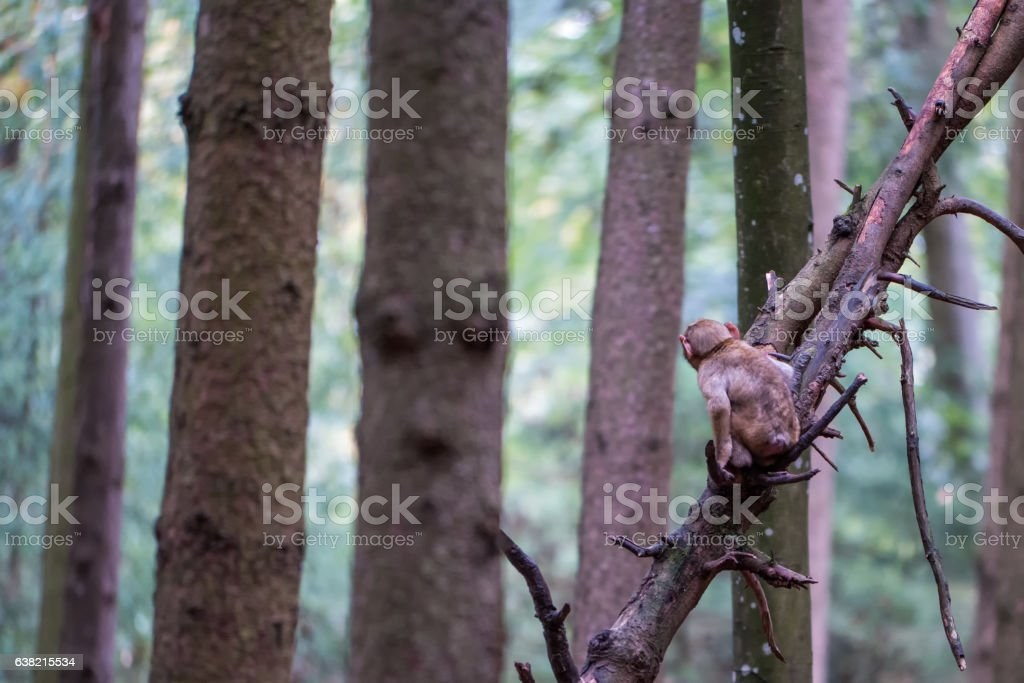 Monkey forest - Infant monkey in the forest – Foto