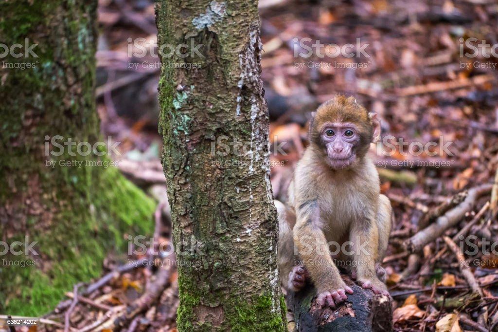 Monkey forest - Infant sitting next to tree – Foto