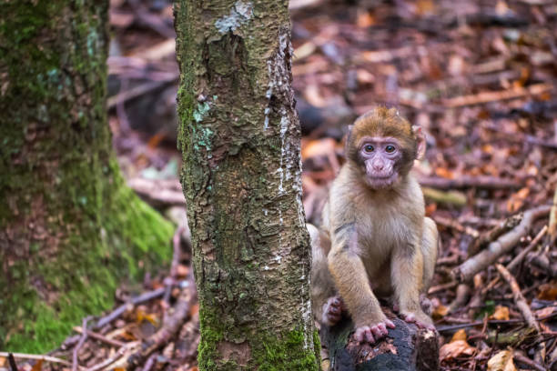 Monkey forest - Infant sitting next to tree – Foto