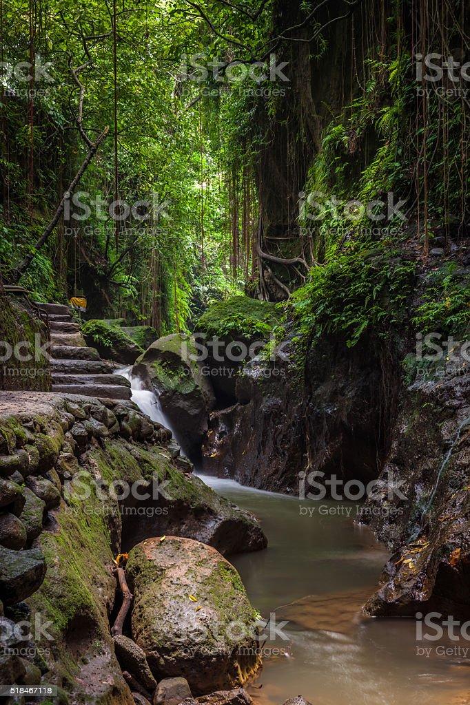 Monkey Forest Sanctuary, Ubud, Bali royalty-free stock photo