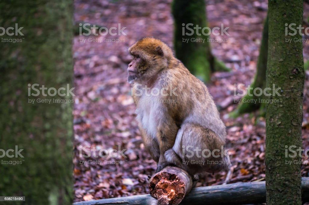 Monkey forest - Sitting on a branch – Foto