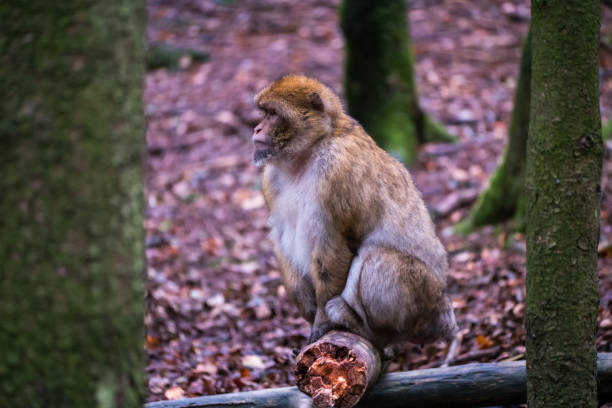 Monkey forest - Sitting on a branch – Foto
