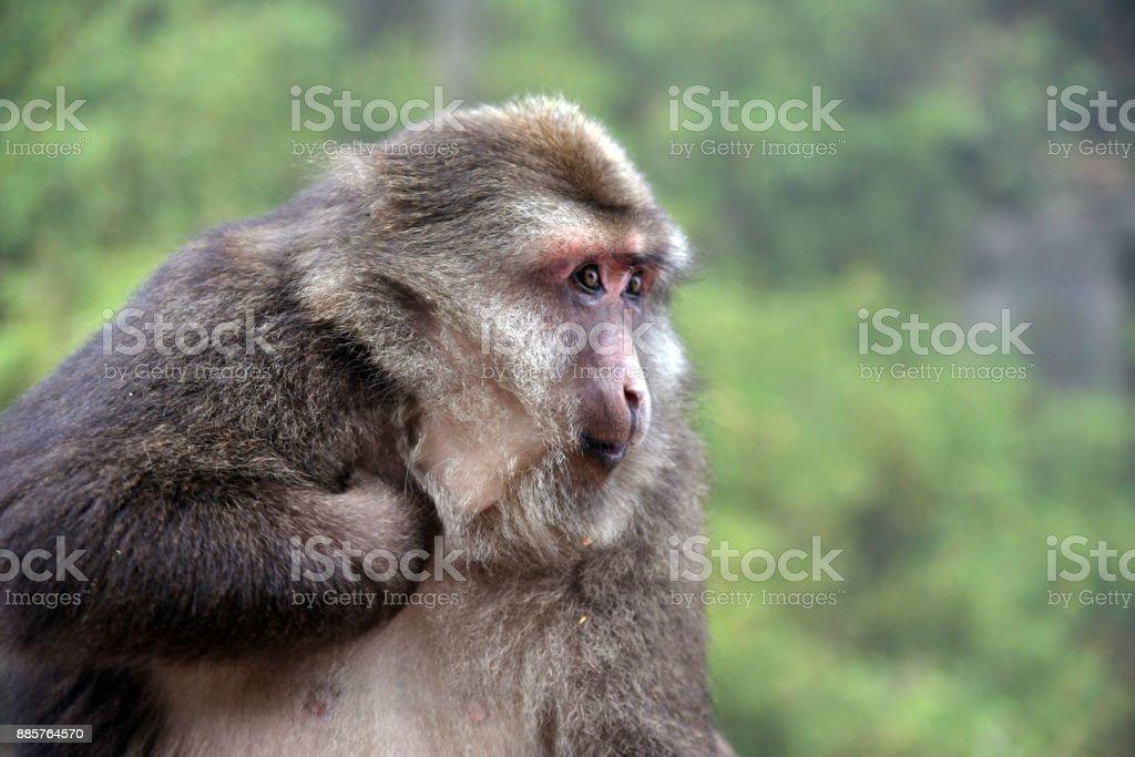 mono mirando hacia fuera - foto de stock