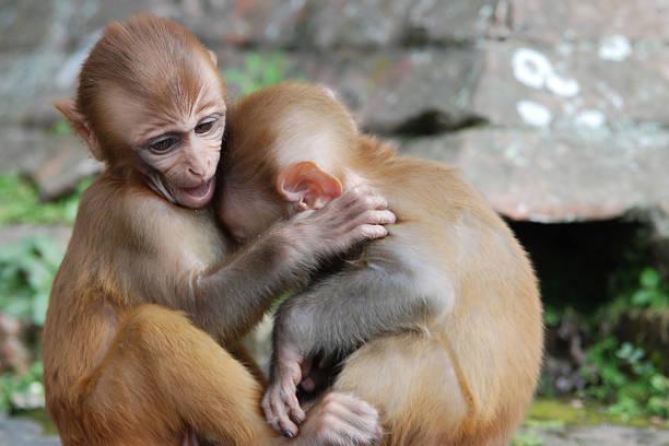 Monkey Hug stock photo