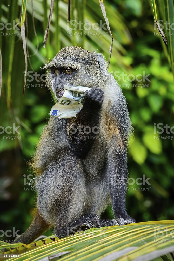 monkey hungry for money stock photo
