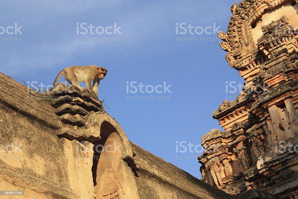 Monkey in Hanuman Temple, Hampi, India. royalty-free stock photo