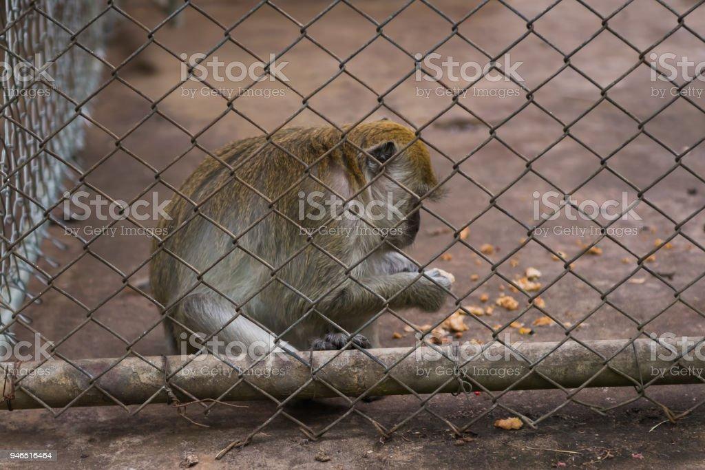 monkey in the zoo stock photo