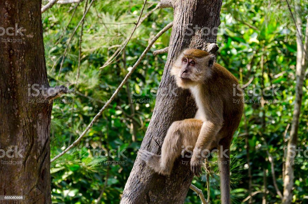Monkey in wildlife stock photo