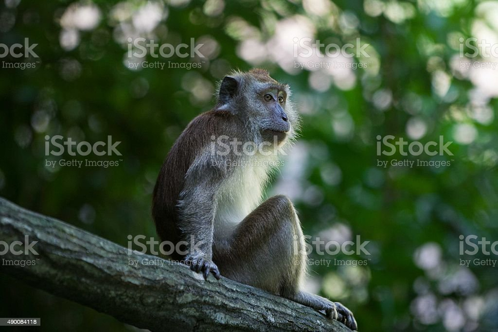 Monkey is relaxing stock photo