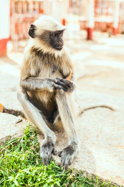 Monkey is sitting stock photo