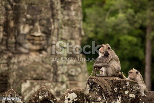 A family of monkeys atop an ancient temple