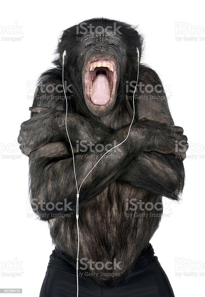 Monkey listening to music stock photo