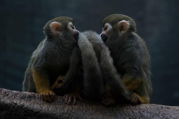 Monkey Love stock photo
