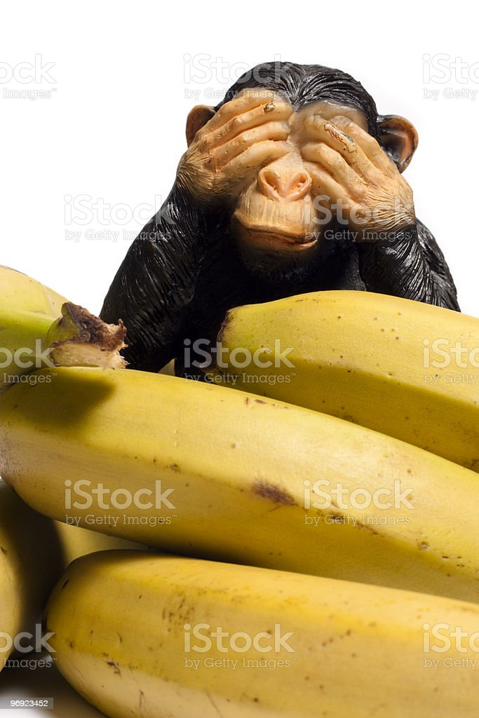 Monkey on a diet royalty-free stock photo