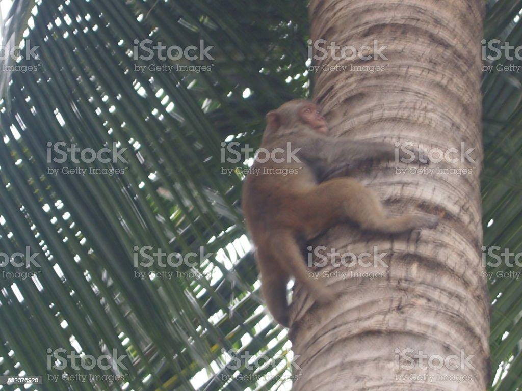 Monkey on a palm tree royalty free stockfoto