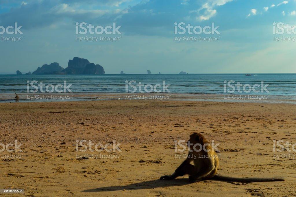 A monkey on the beautiful Ao Nang beach, Krabi, Thailand stock photo