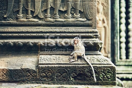 istock Monkey on the temple wall 893020934