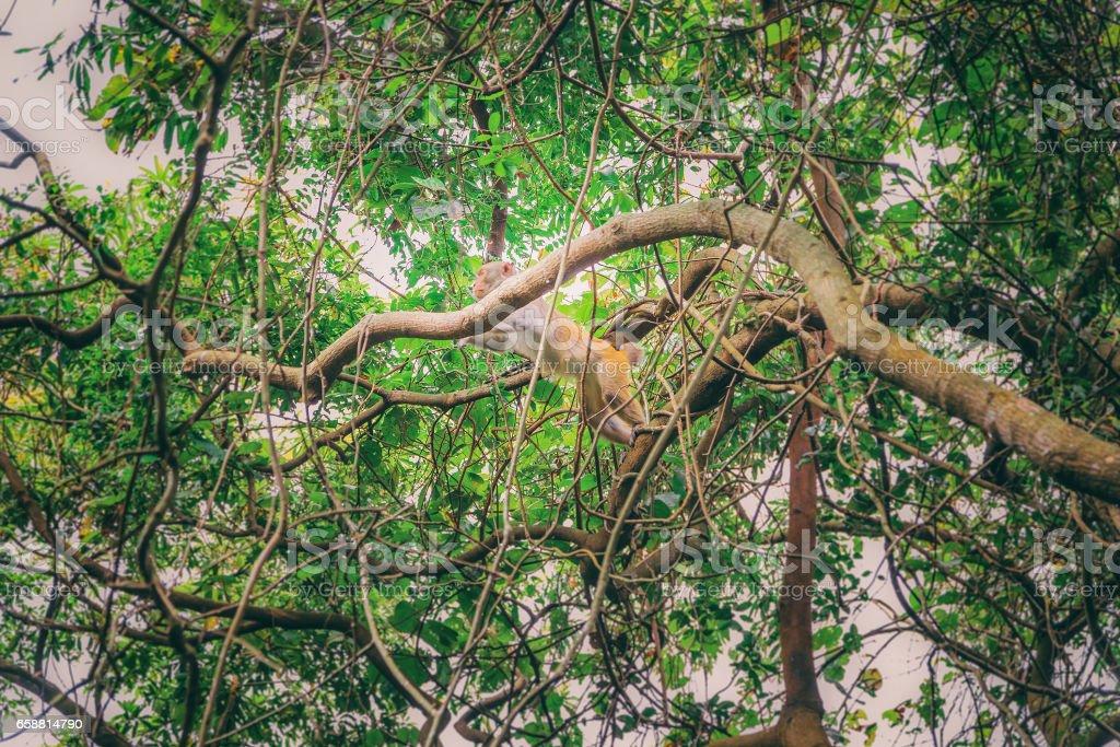 Monkey on tree stock photo