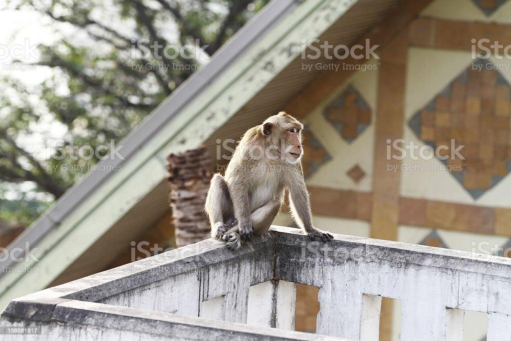 원숭이 royalty-free 스톡 사진