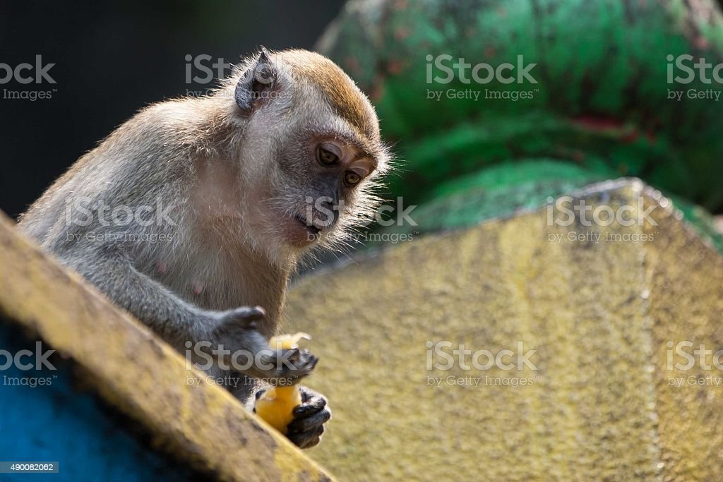 Monkey stock photo
