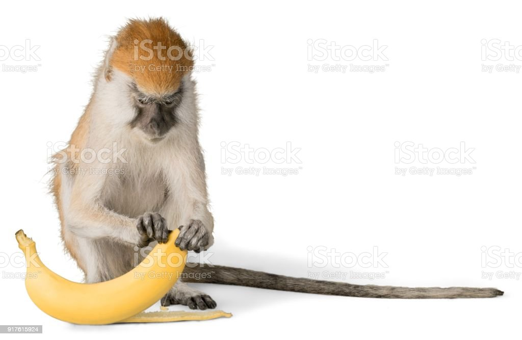 Monkey. stock photo