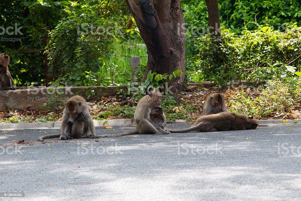 Monkey playing street stock photo