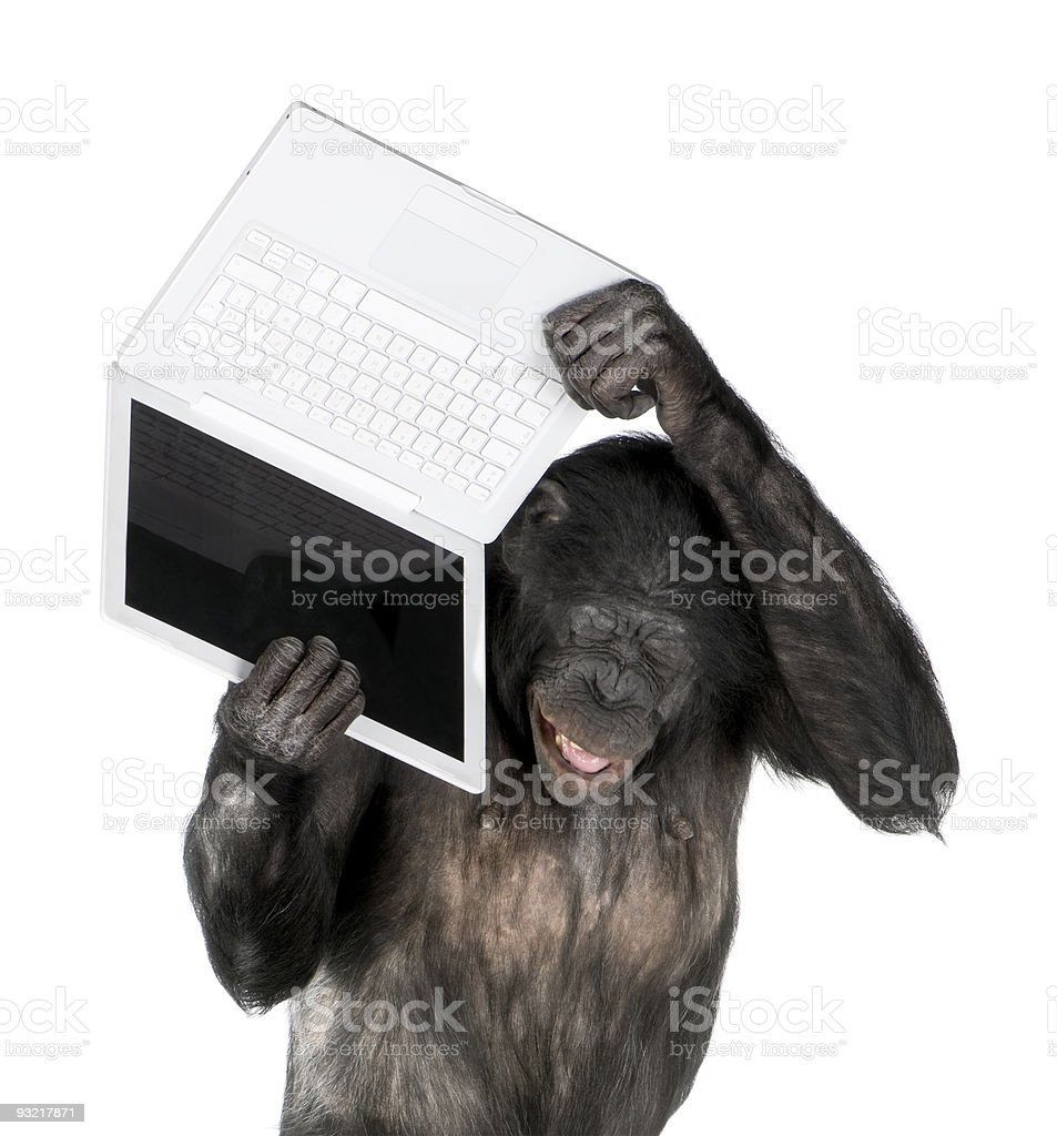 Monkey playing with a laptop stock photo