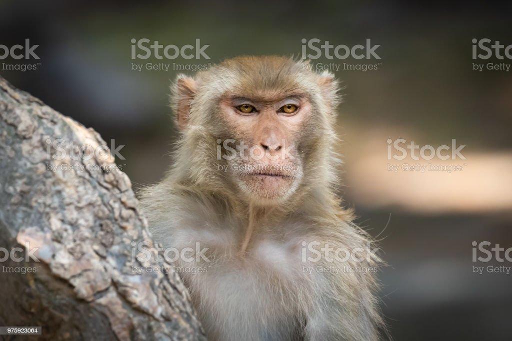 Monkey portrait stock photo