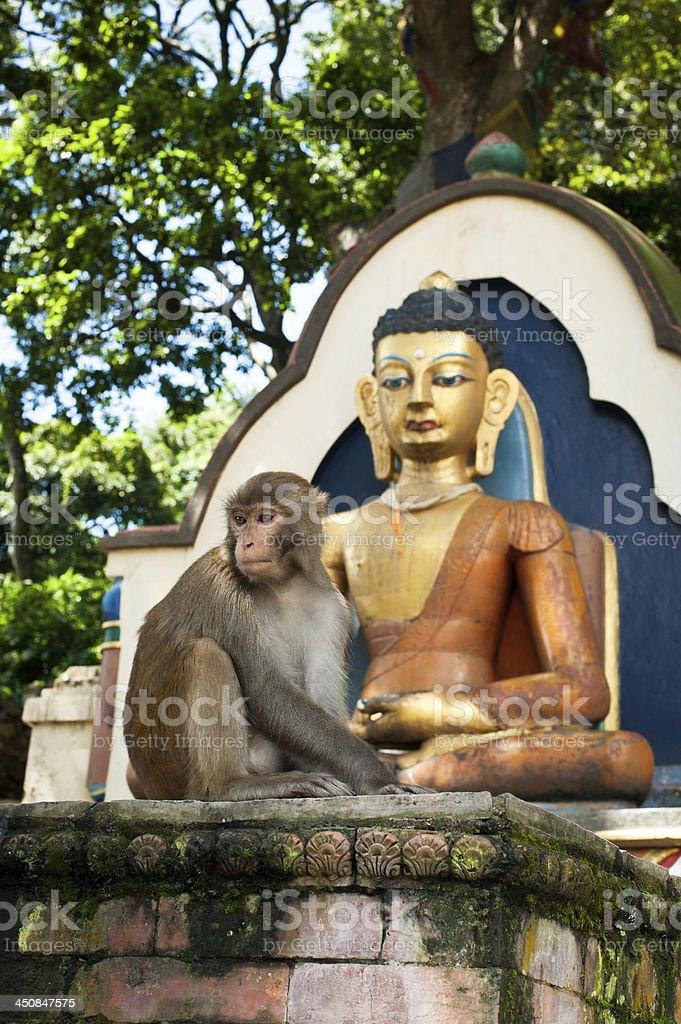 Monkey sitting near Buddha statue. Nepal royalty-free stock photo
