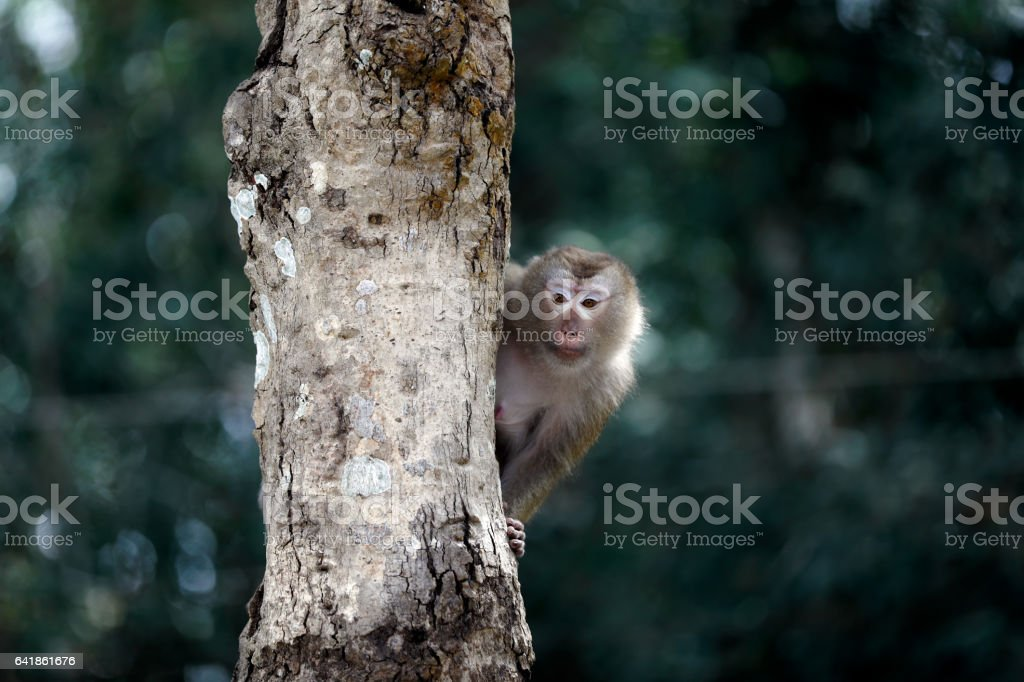 Monkey sitting on a rope on a tree. stock photo