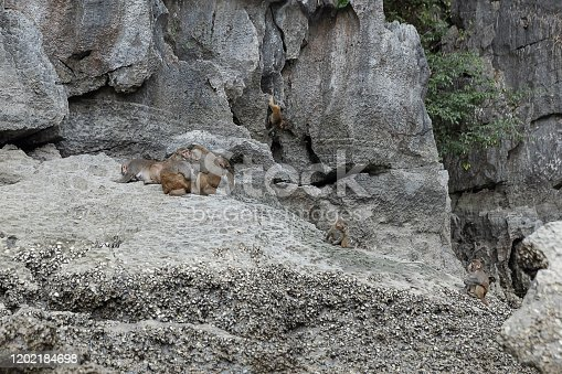 monkey sitting on stone at rocky cliff island