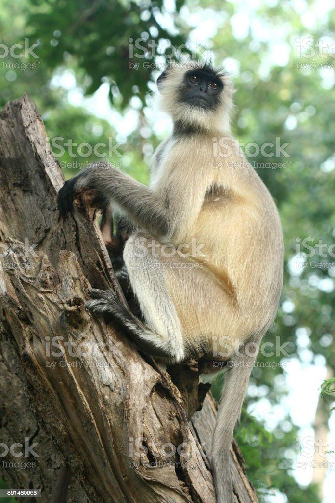 Monkey sitting on tree stock photo