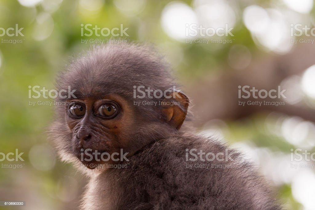 Monkey Staring at Camera stock photo