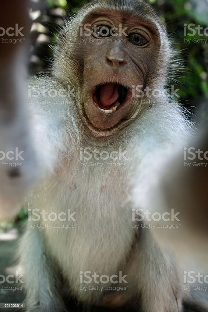 Monkey taking a funny selfie stock photo